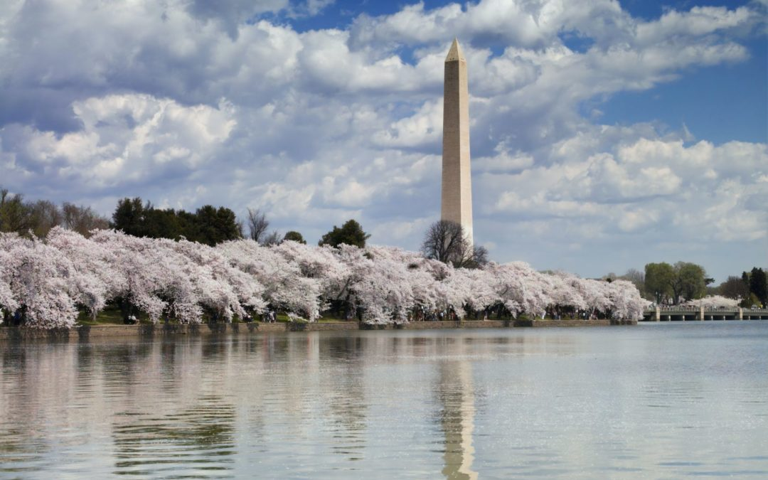 History and Stone in Washinton, DC | Things We Love